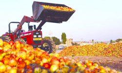 سیب های آذربایجان ، به سود دلاّلان ، رها شده کنار جاده ها !